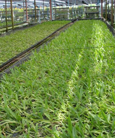 Order Консалтинг по вопросам выращивания орхидей